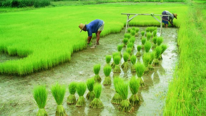 india an agricultural powerhouse of the world
