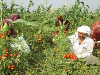 organic-farming2015