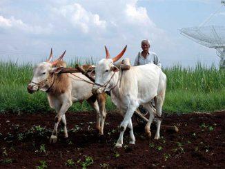 farmers-6-reuters