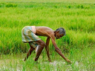 farmer-u2105684219062ee-621x414livemint