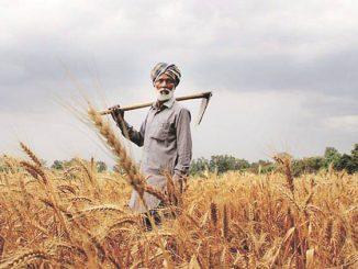 punjab-farmer-759