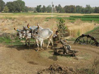 40-landwirtschaft
