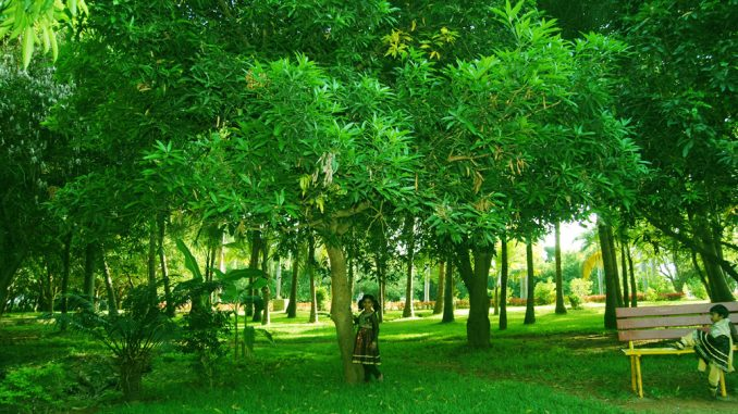 Image Result For Green Nature Quotes Quotes On Nature Greenery