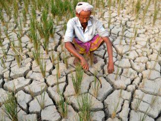 2014-06-20-droughtstrickenricefieldindiacreditmanojdekacorbisccr230