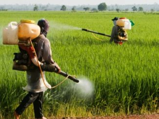 pesticides-and-agro-chemicals-companies-in-india-e1453192475105