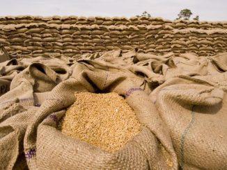 wheat-grains_2-621x414