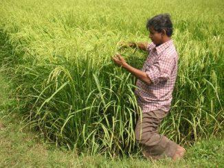 india_nagipattinam_sri_field_with_yadhav-copy