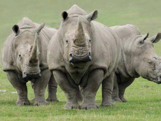 rhino_650x400_71448284622
