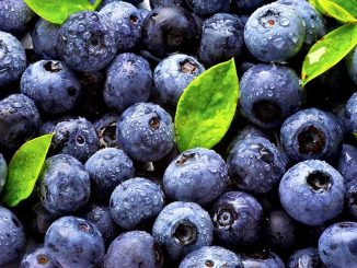 886549-1-eng-gb_blueberries