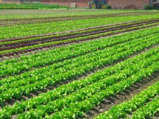 agriculture-e1510326078458