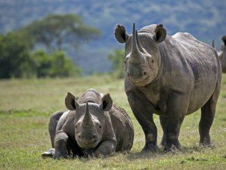 b461b7de1fdfd08d90fafd8b08727b72-park-rangers-rhino-poaching