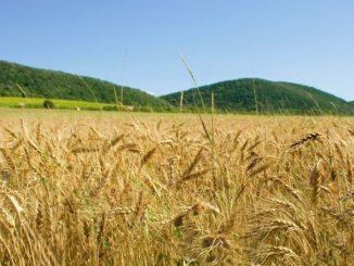 wheat-fieldj_20130923130435358