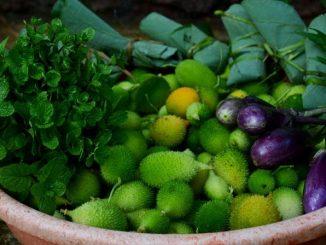 monsoon-harvest-at-vrindavan-farm