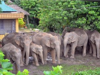 11-09-15-tezpur-wild-elephants-in-residential-area