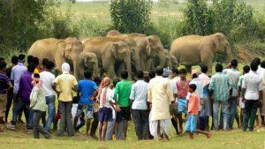 district-hindustan-elephants-surrounded-villagers-sonahatu-village_fa277bcc-76c7-11e7-b40f-35ec362abc1c