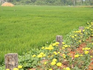 How a dumpyard was transformed into a paddy field