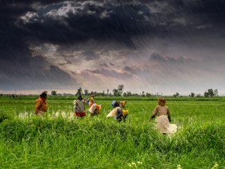 Natural Farming state