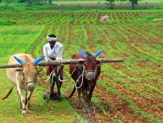 farming-in-india