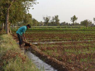 Flood Irrigation India