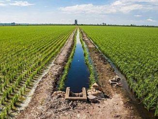 India's farm sector