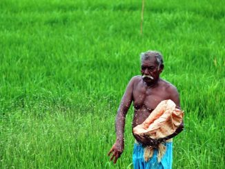 Farming in India unprofitable for nearly 2 decades
