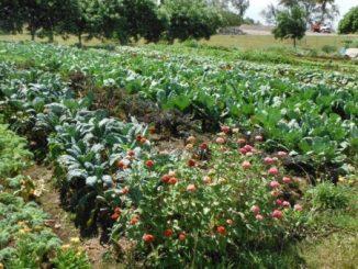 nutrition-farming