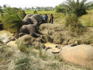 Seven Elephants Electrocuted by Sagging 11 KV Power Line in Kamalanga, Dhenkanal. Photo: Wildlife Society of Odisha (WSO)