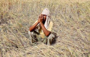 In India's  Debts Farmers