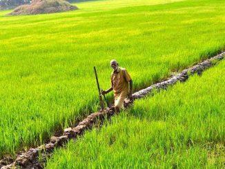 Kerala farming