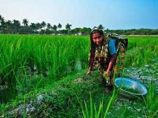 women in agriculture in india