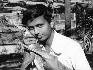 Dr Lala Ashwin Kumar Singh with Gharial,1970s at Tikarpada. Photo by Rajesh Bedi