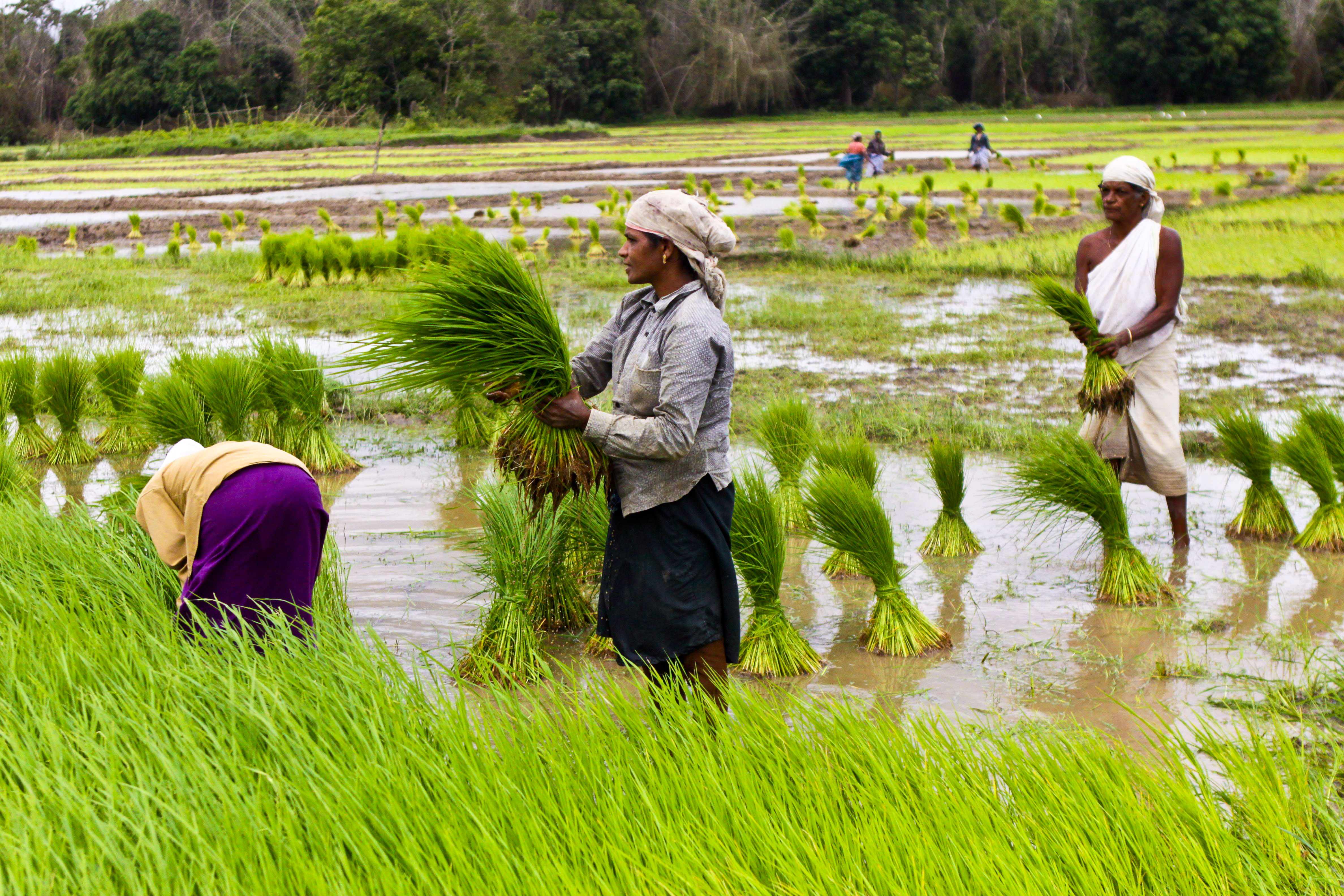 Agriculture experts pitch for income security for farmers ...