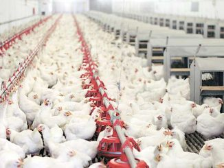 poultry-industry-759