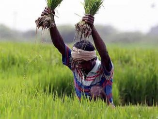 From plate to plough: India must get its agri-markets right